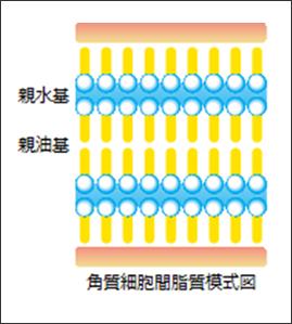 カプセル製剤の電子顕微鏡写真